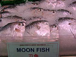 Moon fish for sale