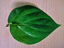 Bai Plu - Betel Leaf