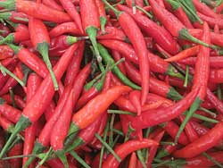 Red Thai Chillies