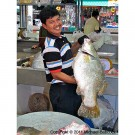 Fish Vendor 2 thumbnail