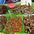 Fried Insects thumbnail